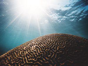 Já ouviu falar de Neuroplasticidade?