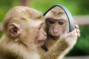 A Terapia do Espelho como abordagem terapêutica – Neurónios Espelho